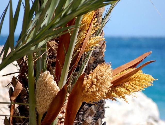 palmiflor
