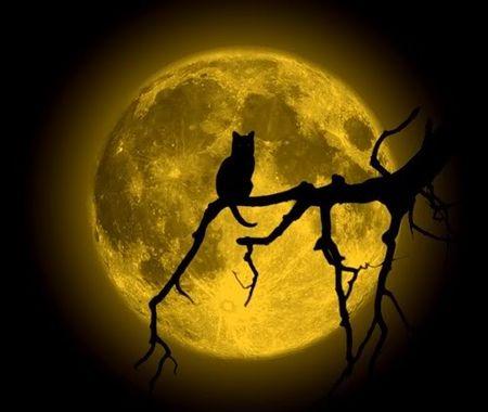 cat_n_moon