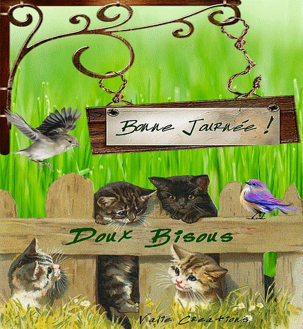 journée chats oiseaux 1