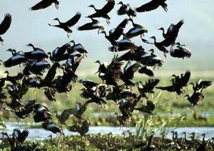 les-animaux-migrateurs-perturbes-par-le-rechauff_paysage360