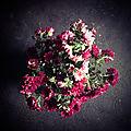 Pompon rose