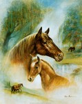 cheval_4