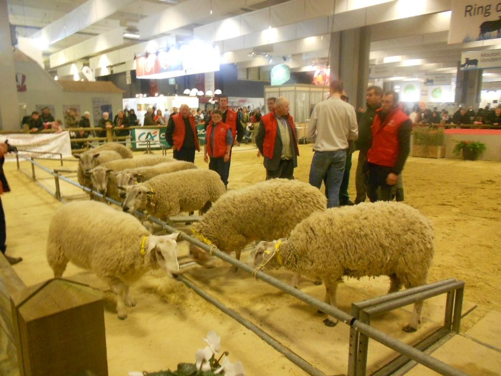 Le concours du mouton boulonnais au salon promenboulonnais for Salon du cul