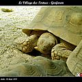 Le village des tortues - gonfaron