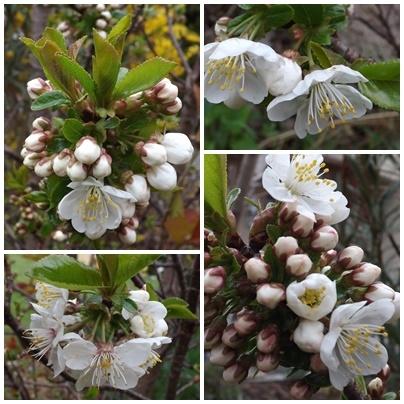 Jardin_avril__15_