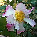 Le calendrier lunaire du jardinier en janvier 2013