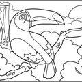 toucan-encrage