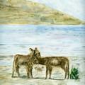 Bisous d'ânes au bord du Lac Titicaca