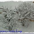 Vdb 37 – un arbre en hiver