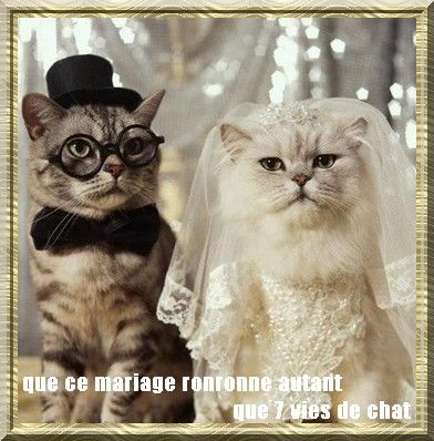 montage_mariage_chats
