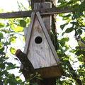 2009 06 02 Le mésange bleu qui donne a manger a ses petits dans le nichoir (4)