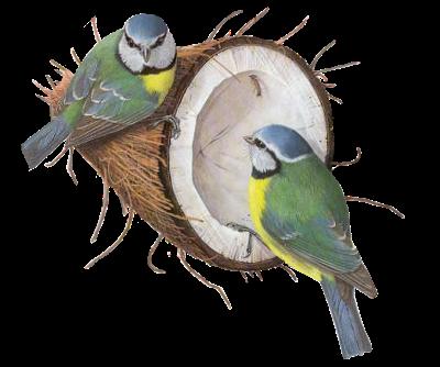 720017tubes_oiseaux_tiram__68_