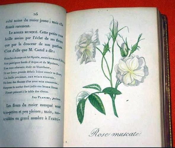 1815 ROSES Etrennes aux Dames