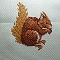 écureuil 003