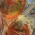 On a adopté des souris