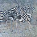 La namibie : safari au parc d'etosha 3
