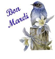 bon mardi oiseau 22 07 2014