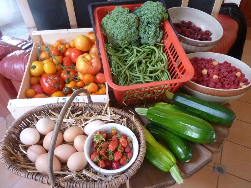 15-récolte du jour (2)