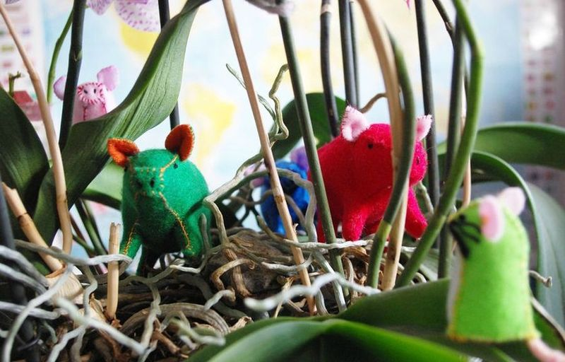 cochon en visite chez la souris verte