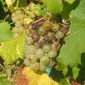 Tout autour des vignes