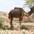 maroc 129