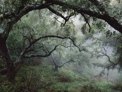 douglas-steakley-oak-tree-forest-after-storm