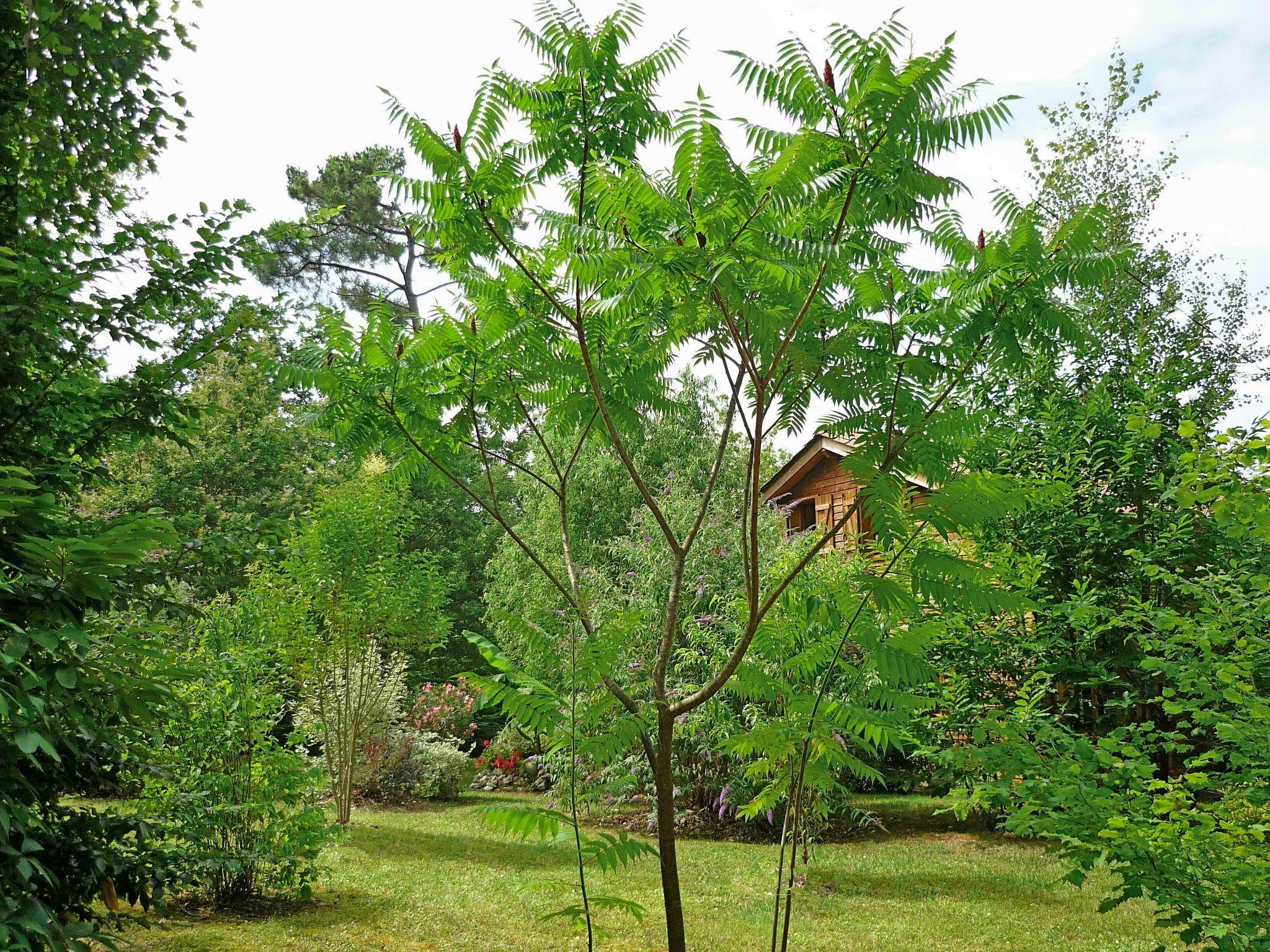 Photo de mon jardin abonnement conseils pour r ussir vos for Conseil plantation jardin