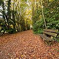 automne 1