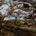 2009 10 31 Le Lizieux vu depuis des branchages d'un fayard