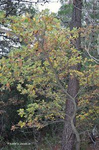 Promenade dans les bois - Novembre 2012 - 013