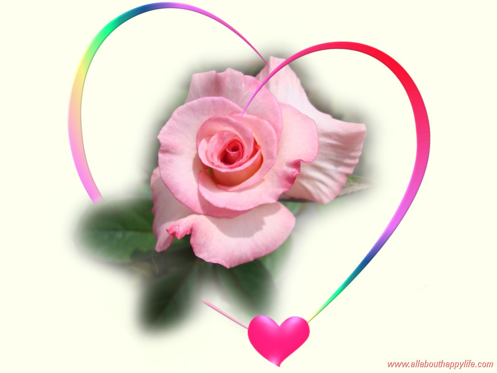image amour rose