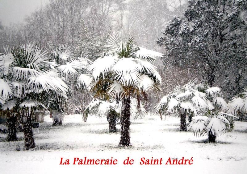 La Palmeraie de Saint André
