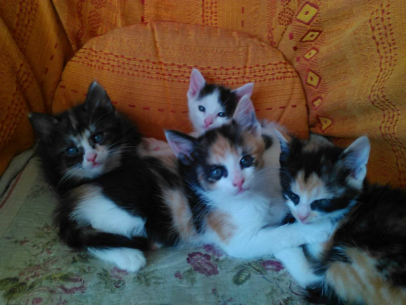 chatons 9 10 2015 6 semaines et demi