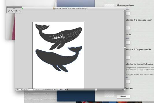 patere baleine