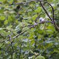 056Geiranger_birdtrail11