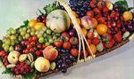 fruits_gd