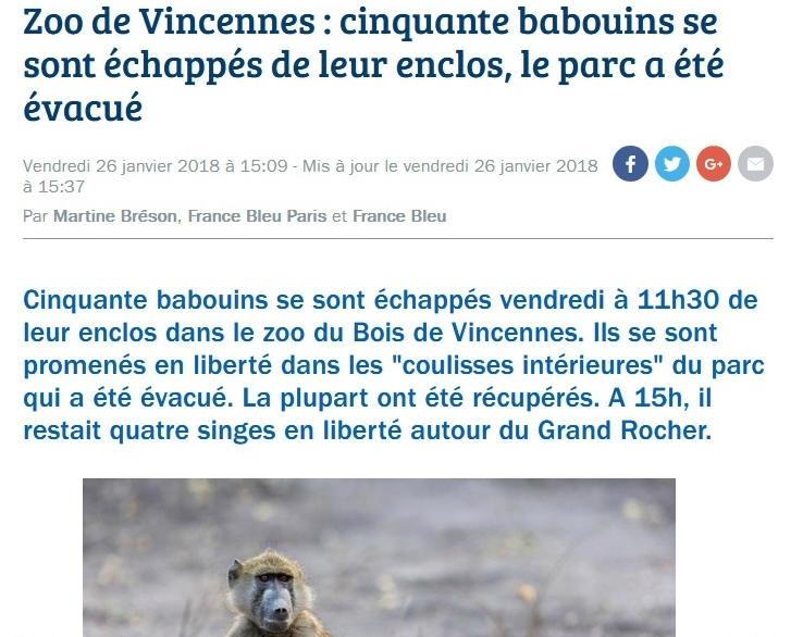 Babouins en liberté
