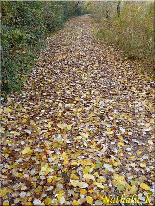 _c__LNK_le_12_novembre_2010_030_copie
