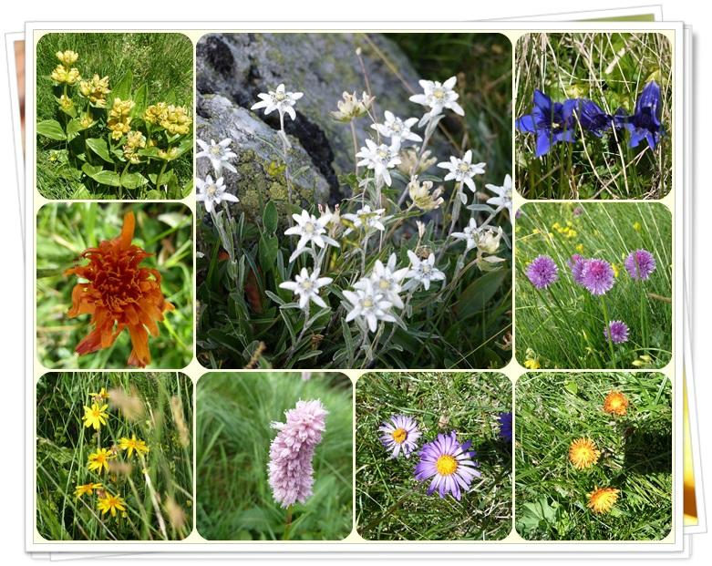 014 les fleurs
