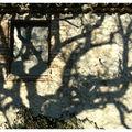 Fenêtre sur ombre