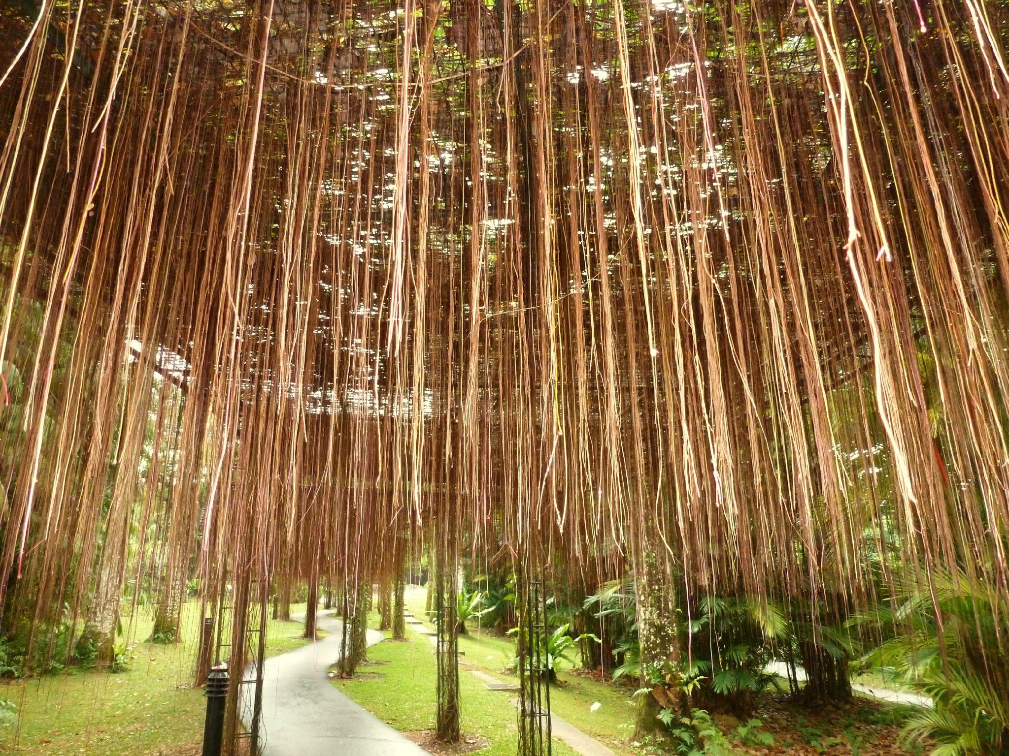 Jardin des merveilles indon sie for Jardin botanique singapour