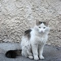 chat Provence 3