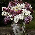 Retour et bouquet de lilas
