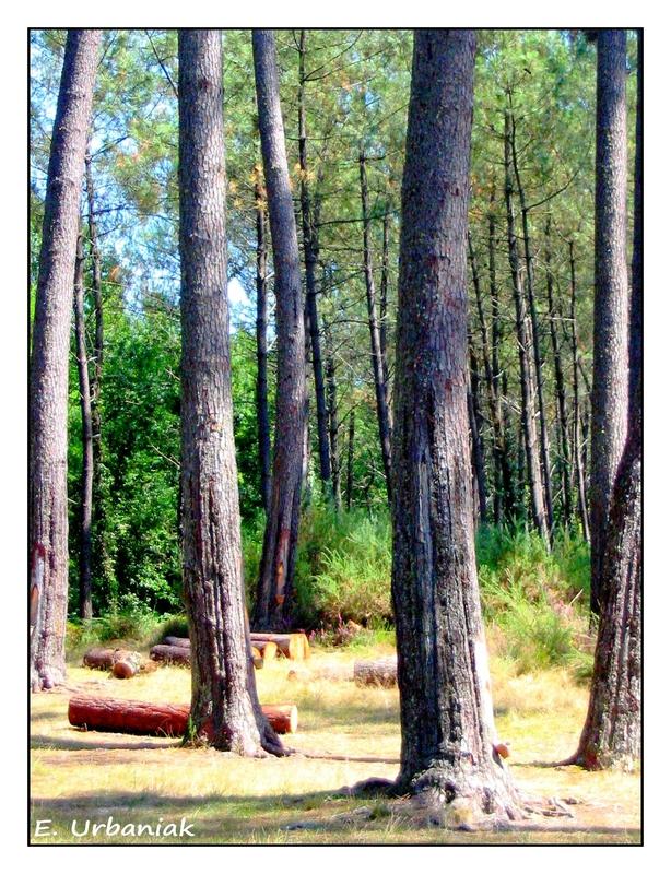 des forêts stations 7