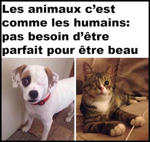 beaute perfection animaux