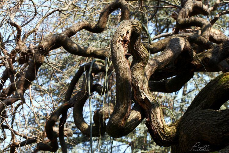 Branches_12 26 03_3879