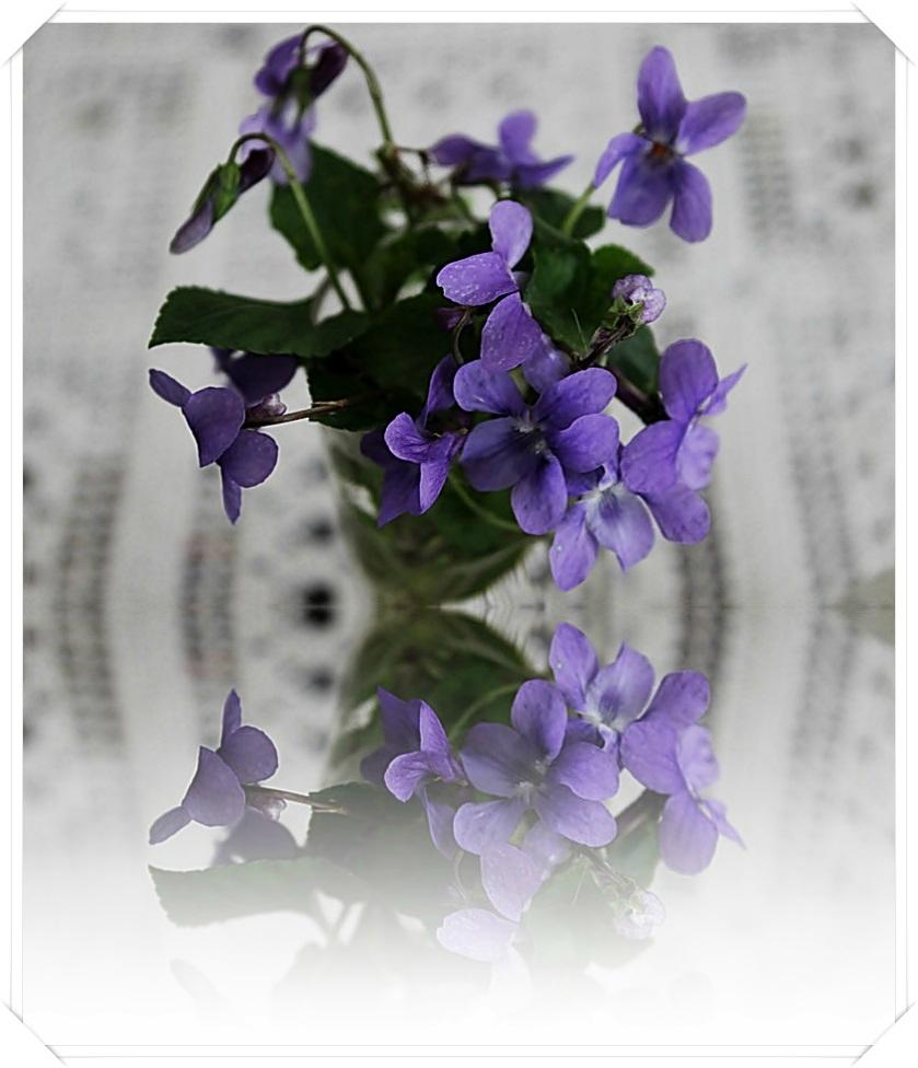 Hymne à la violette.......Verrines mousse de fromage blanc nature et à la violette, framboises, coulis framboises, menthe....