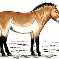 cheval_animal_prehistoire