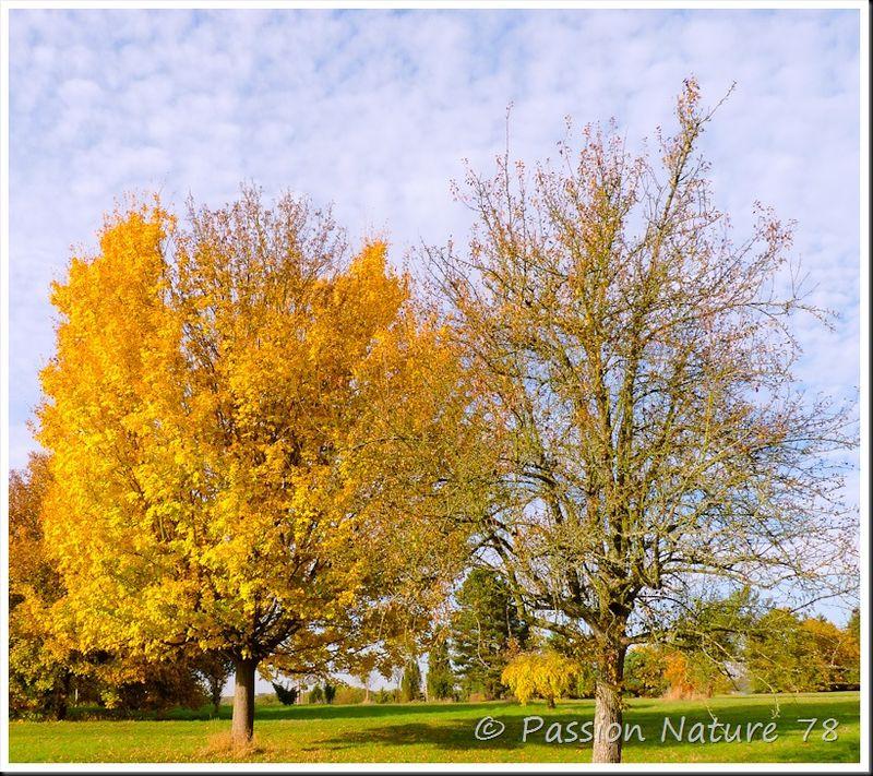 Arboretum de Chèvreloup (24)