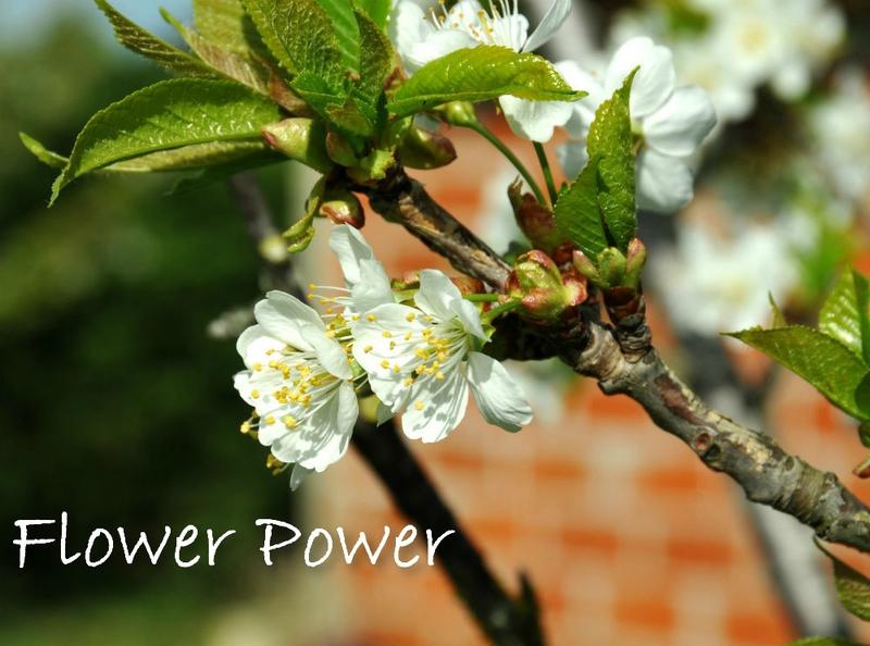 ob_170c44_150420-flower-power